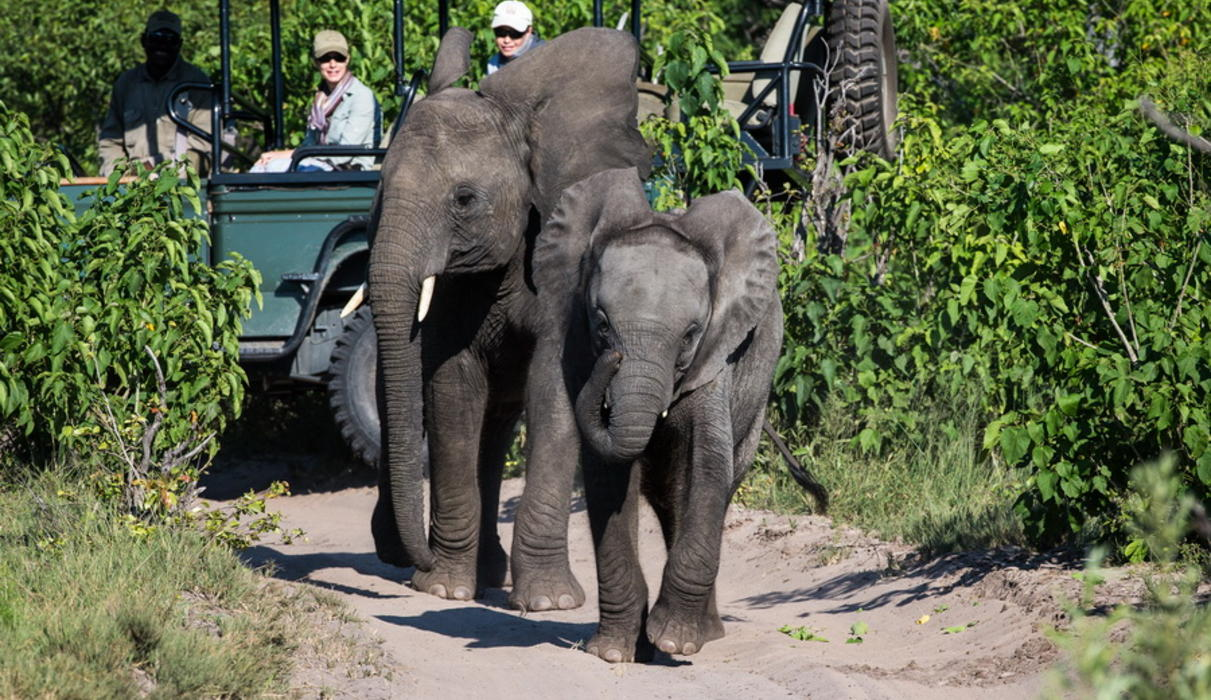 Elephants seen from a game drive