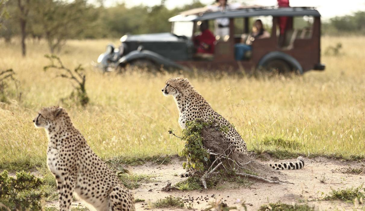 Game Drive On Vintage 4x4