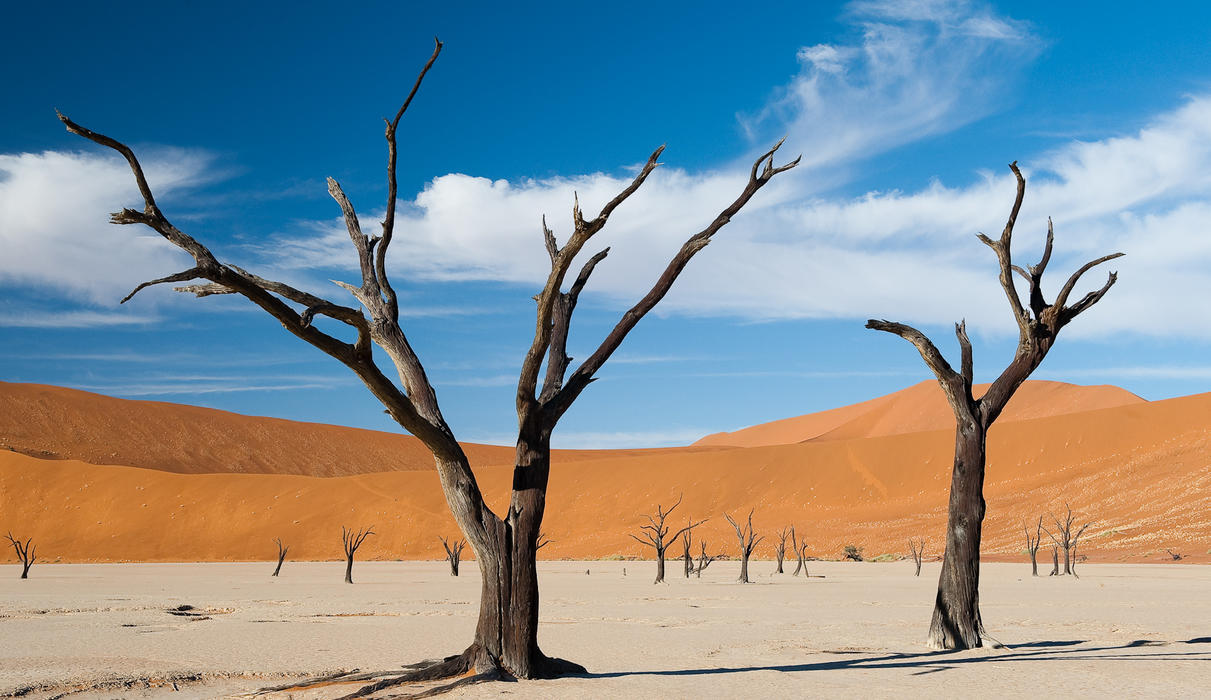 The camelthorn trees in Dead Vlei died some 900 years ago, but it is so dry they haven't decomposed