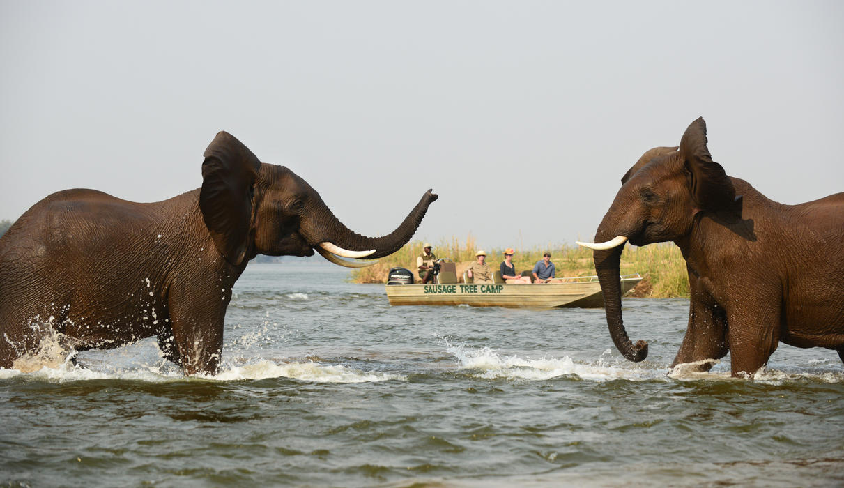 Catch all the action right on the Zambezi River