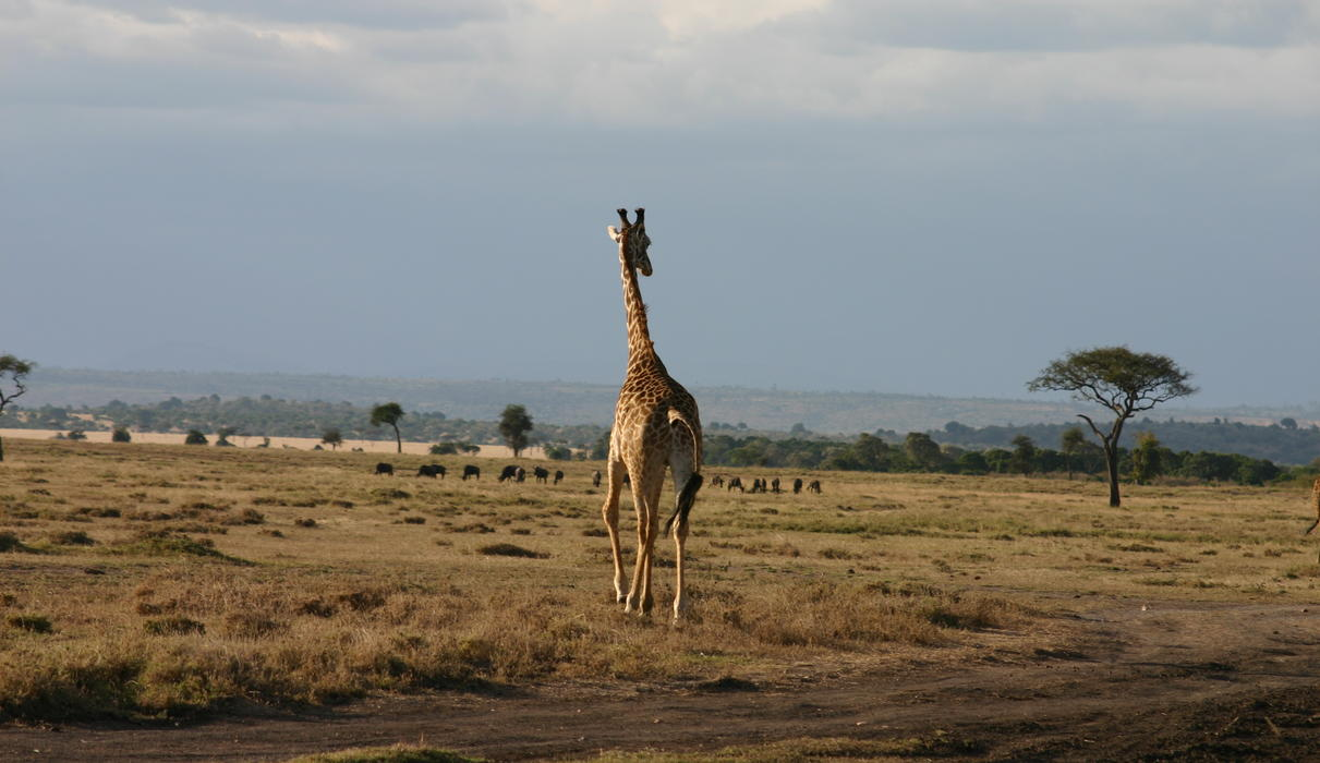 Wildlife at in Mara North Conservancy