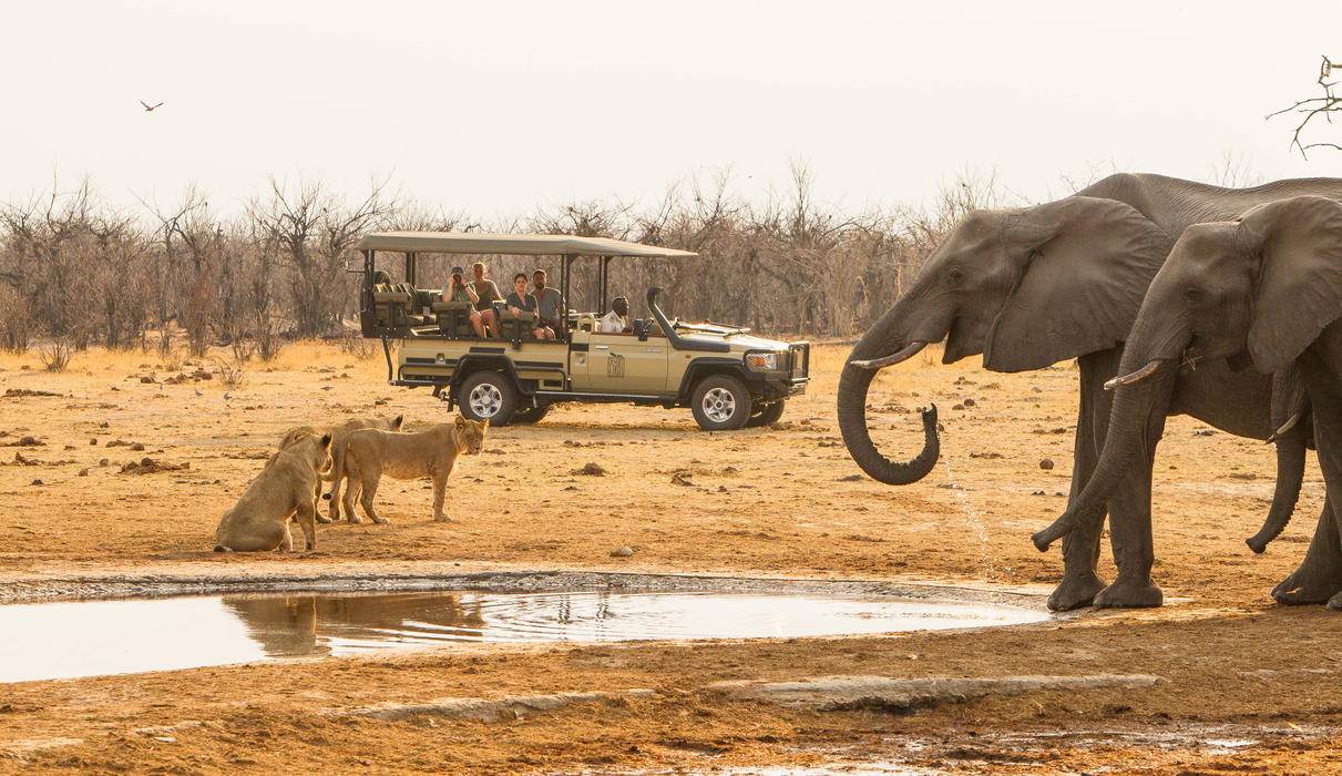 Wildlife sightings with Savute Safari Lodge