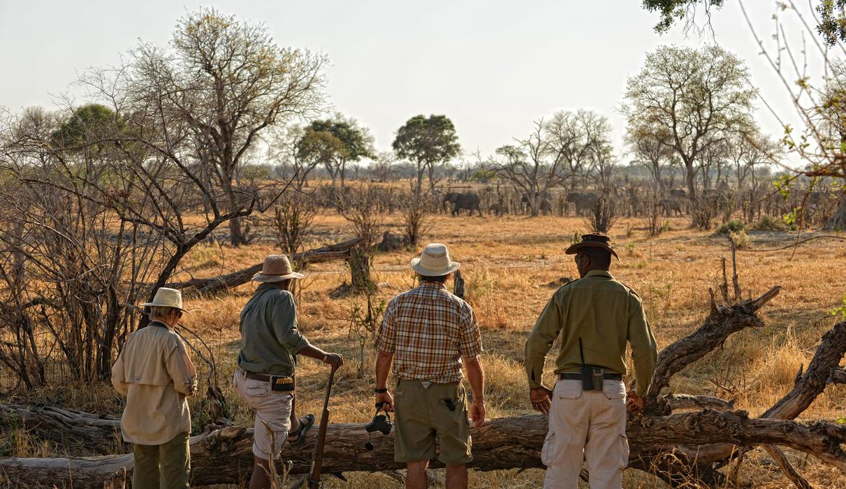 Walking Safari at Linyanti Expeditions