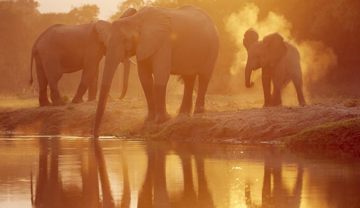 Experience the world class game viewing of the Lower Zambezi