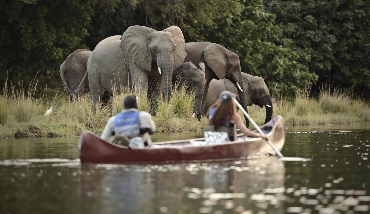 Experience wildlife like you never have with our canoeing safaris