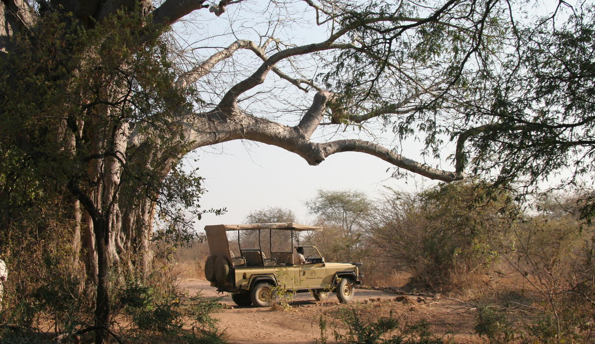 Enjoy Ruaha in our 4WD open sided 4 seater vehicles, private vehicles are available for hire