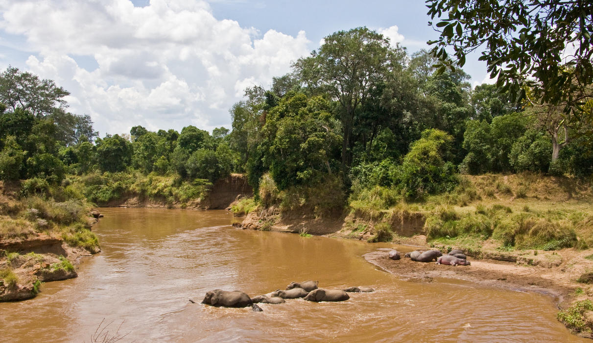 Elephants Cross the Mara River in front of Governors Private Camp