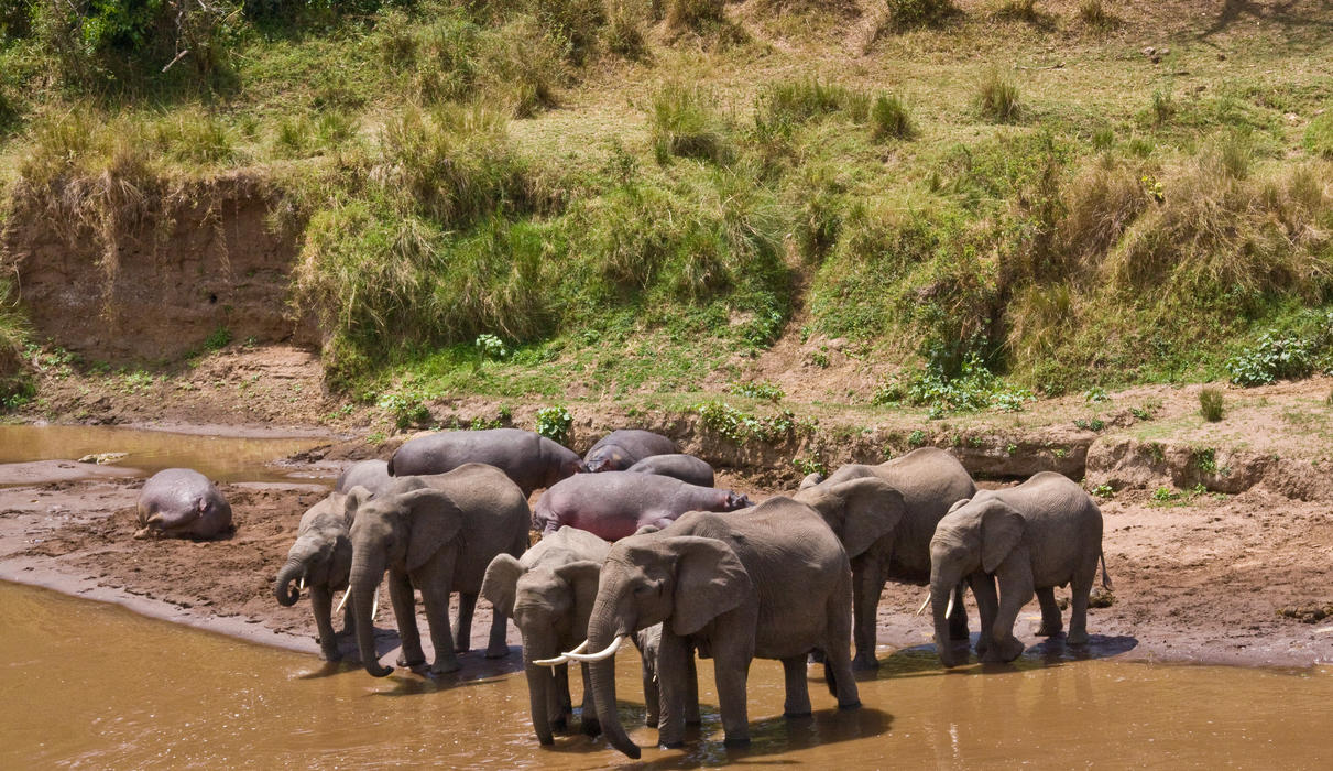 Elephants at the Mara River below Governors Private Camp