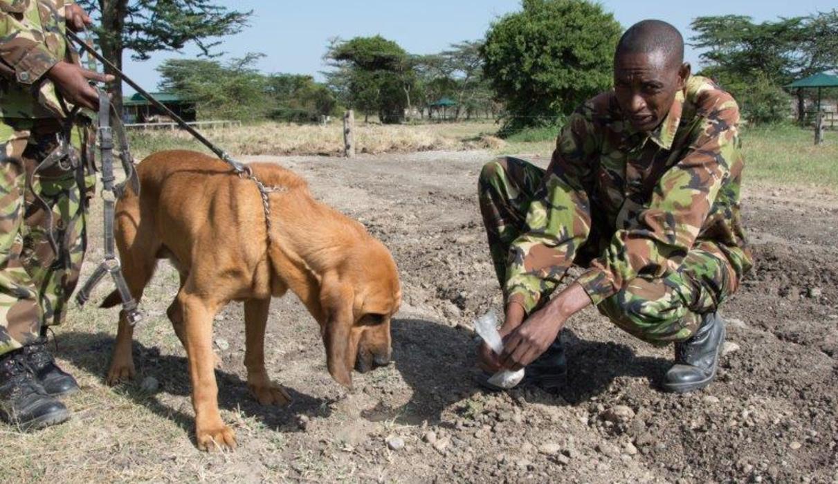 Anti-poaching Dogs Visit
