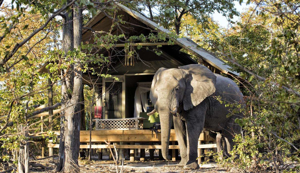 Bedroom with elephants outside