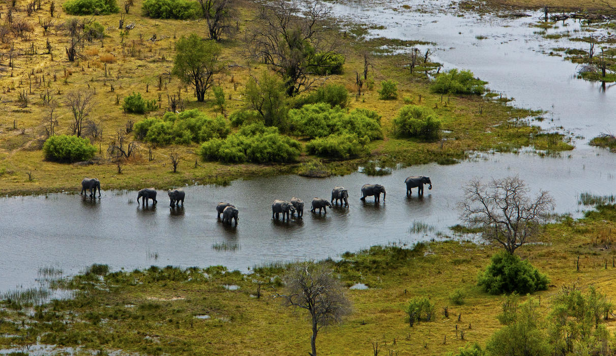 Elephants and the Selinda Spillway from the Air