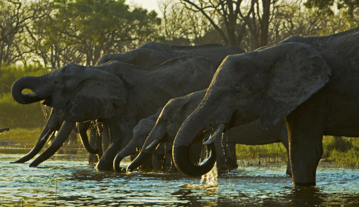 Elephants drinking from the Spillway