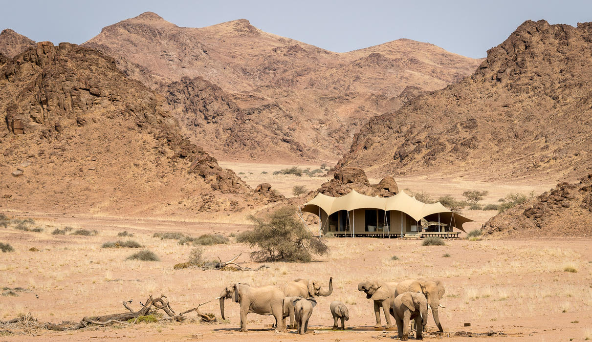 Elephant gather to drink at Hoanib