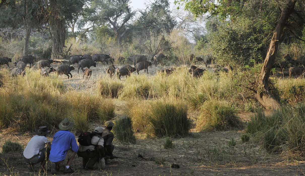 Get close to nature at eye level on a Walking Safari