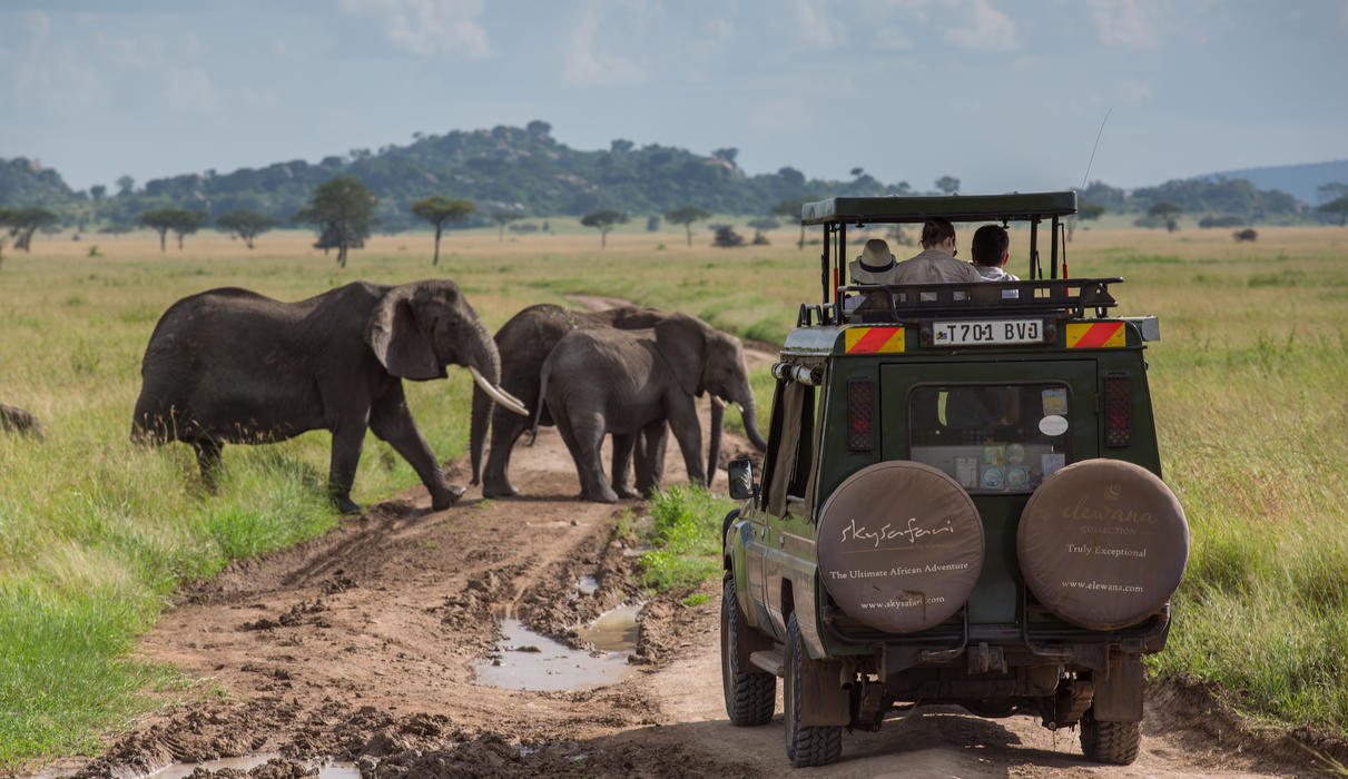 Prime wildlife viewing in custom built 4x4 vehicles