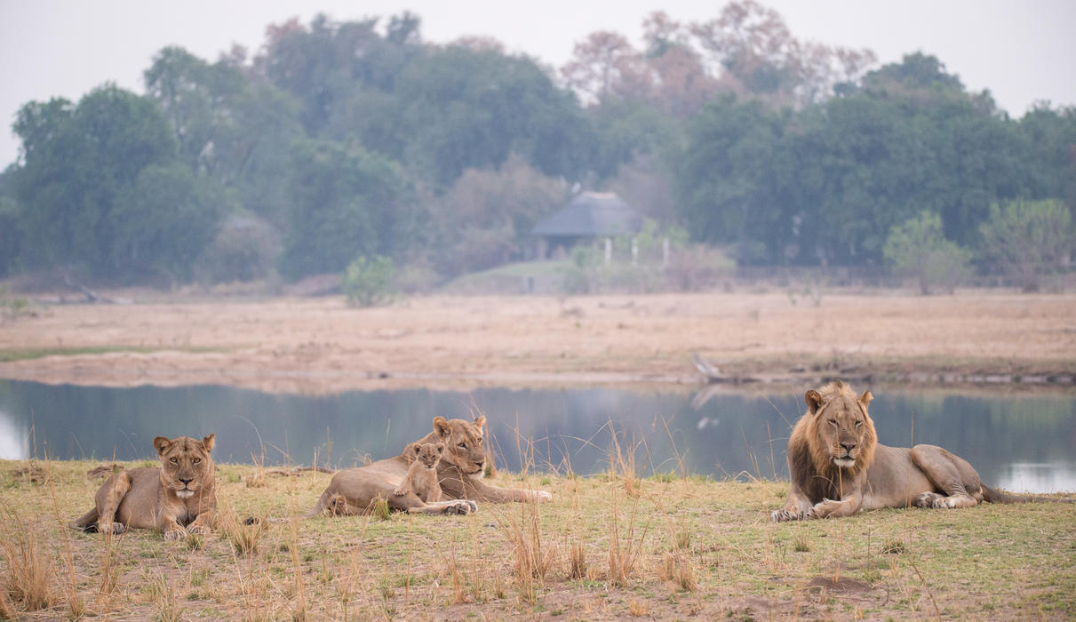 The Chikwenya Pride relaxing across the Sapi River from camp