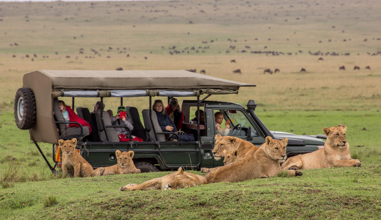 Experience some of the world's best wildlife viewing with our professionally qualified guides
