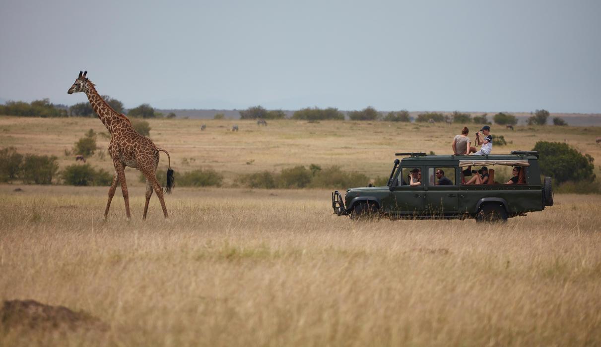 Game drives in the Maasai Mara Reserve