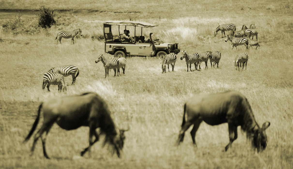 Wildebeests grazing