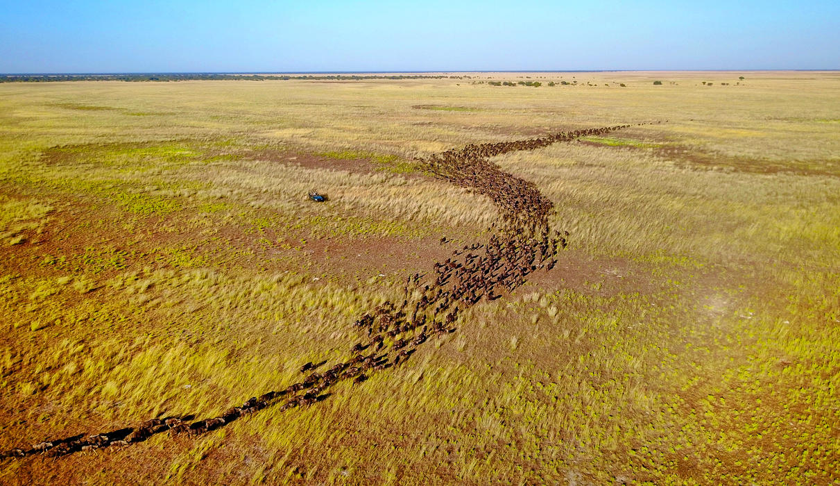 The Liuwa Plain is home to Africa's second largest wildebeest migration - without a single other vehicle around!
