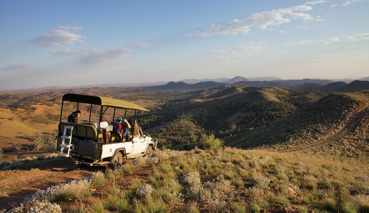 Safari Drives