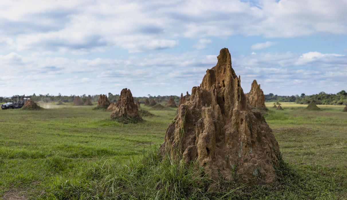 Magnificent termite hills