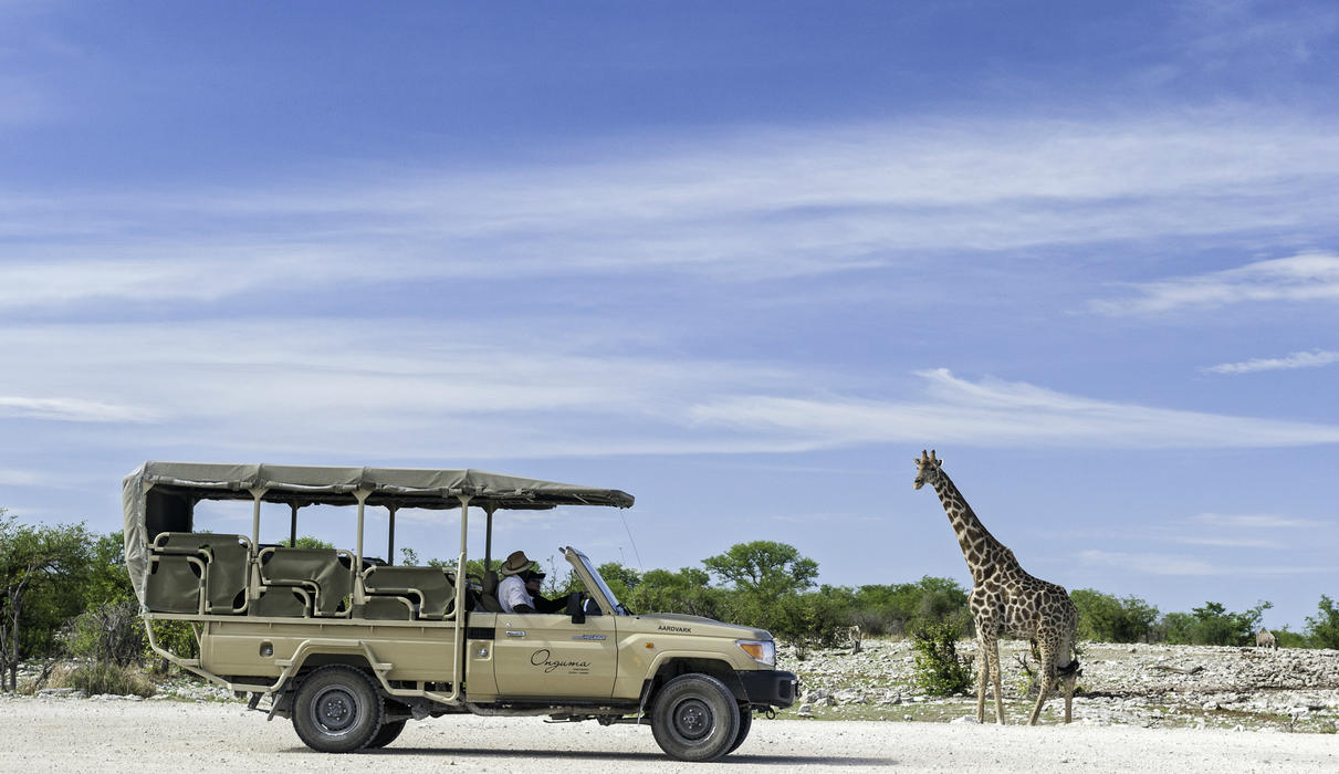 Game drives from Onguma Tree Top Camp