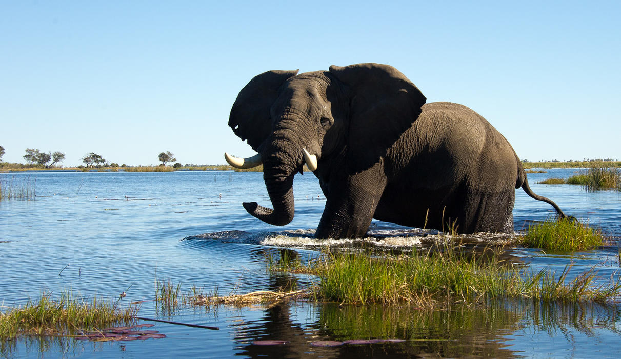The Linyanti River is an oasis for elephant in the dry winter months
