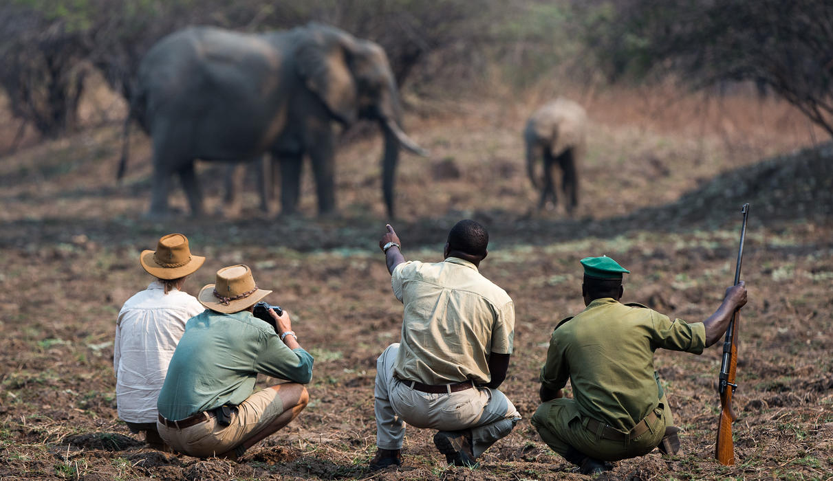 Walking the Luangwa