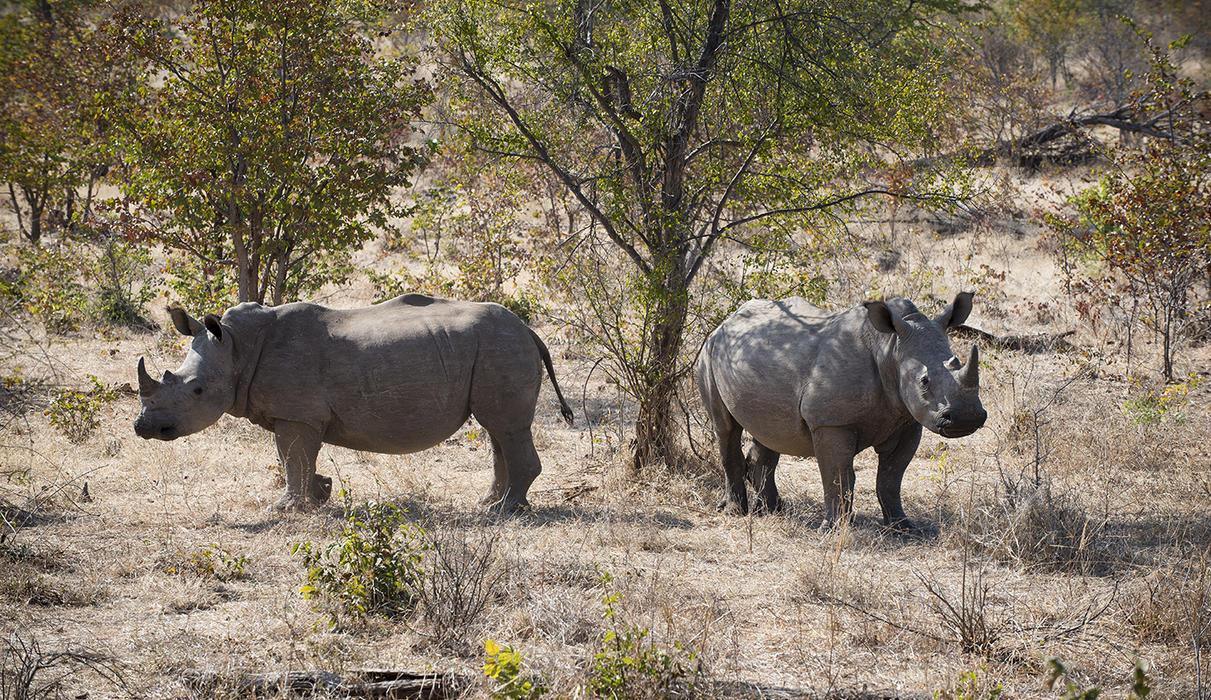 Rhino Trekking