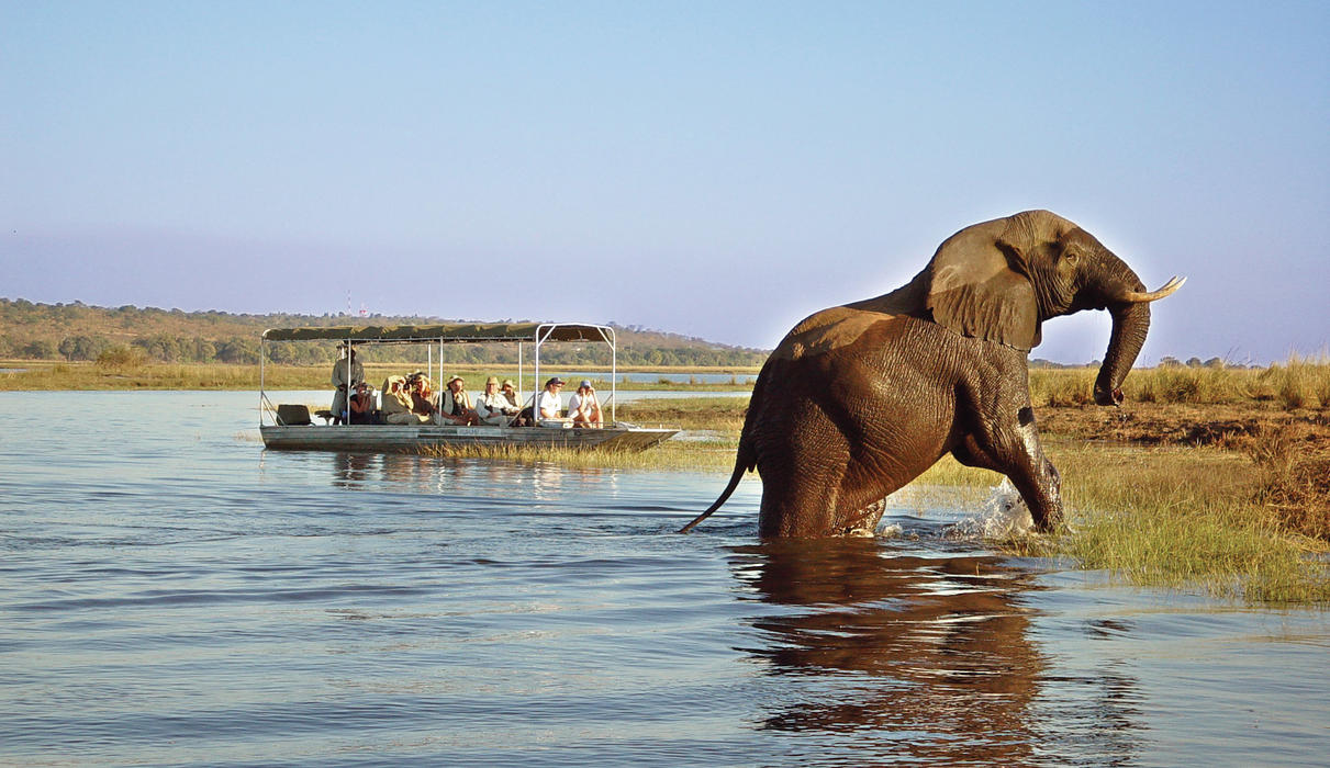 It is easy to include a day trip to Chobe in your Tongabezi itinerary