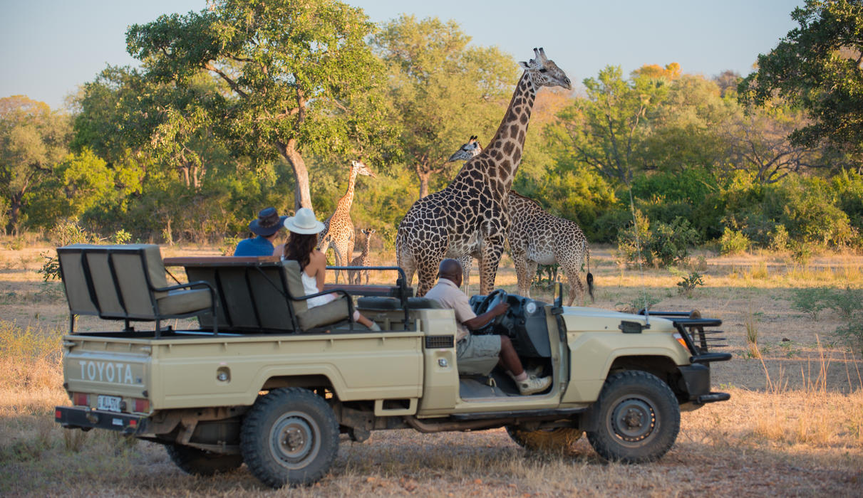 Game drives in the Park