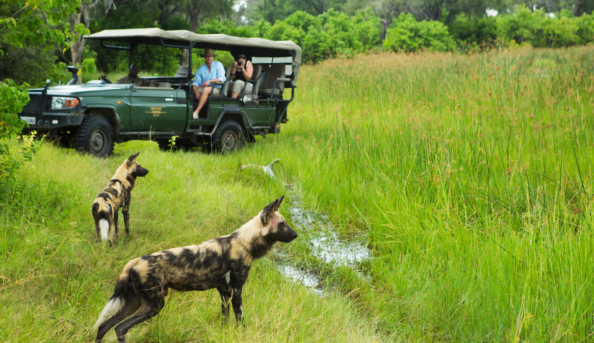 Wild Dogs on the Hunt in Selinda