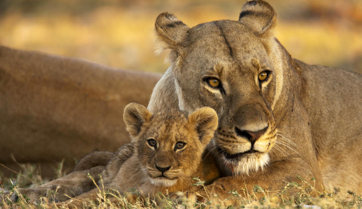 Mother and Cub near Selinda Camp