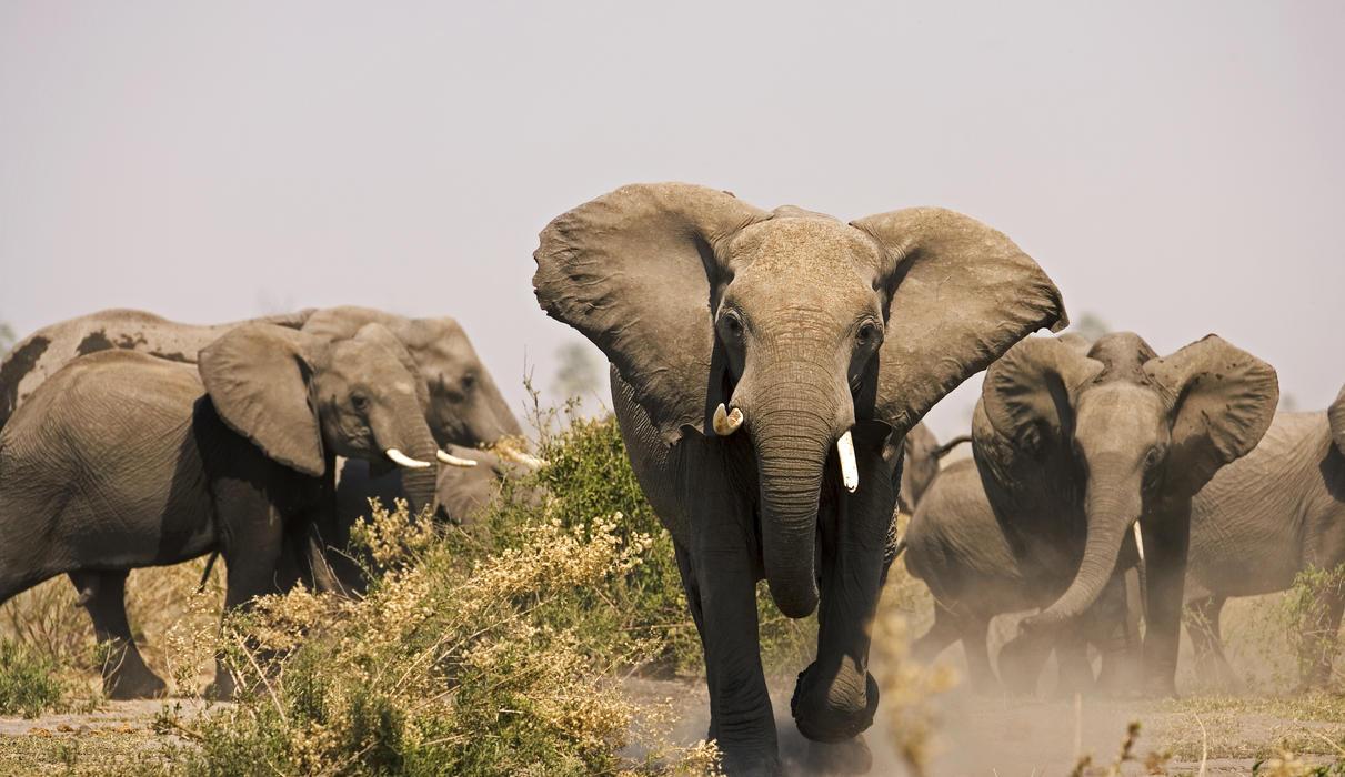 Selinda Reserve Elephants