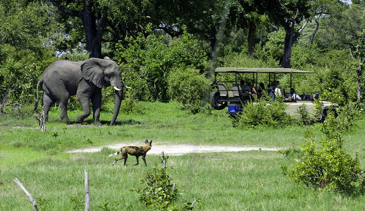 Elephant and wild dog seen on game drive