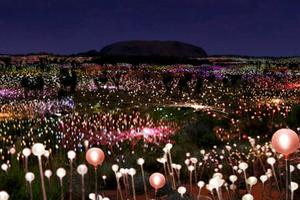 Image result for ayers rock field of light