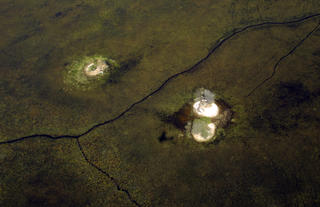 Hippo trails around PomPom Camp; Okavango Delta