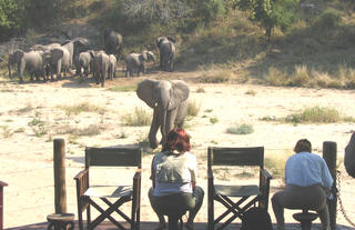 Rhino Post Safari Lodge - Elephants at the Deck