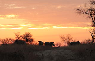 Rhino Walking Safaris - Wildlife