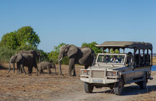 Game Viewing in the Chobe National Park