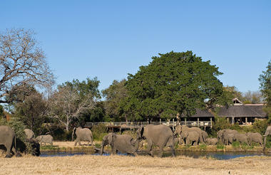 Elephants at Lodge