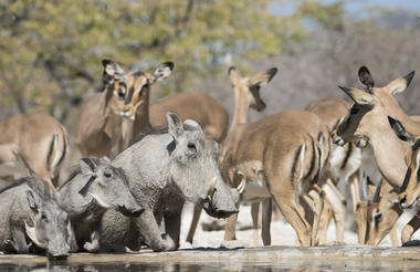 Ongava Game Reserve - waterhole