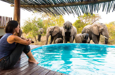 Elephants at the Africa on Foot Swimming Pool