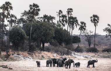 Elephants on the riverbed