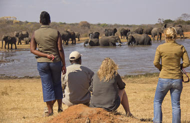 Walking Safari at Ivory Waterhole