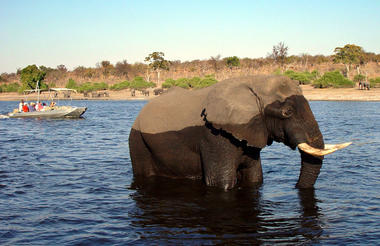 Chobe Bush Lodge boat cruise