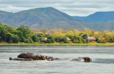 View of lodge with hippos from Mana Pools