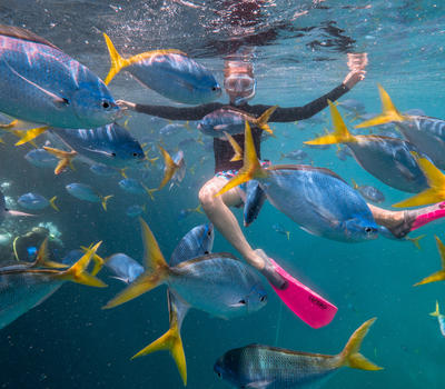 Cruise Whitsundays Great Barrier Reef Adventure - Gallery