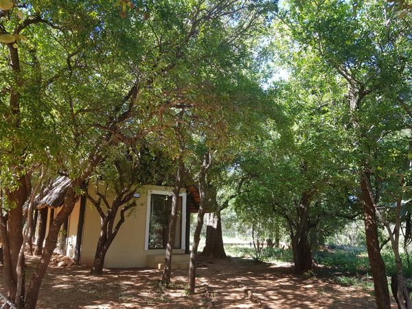Bosbok Luxury Bush Lodge